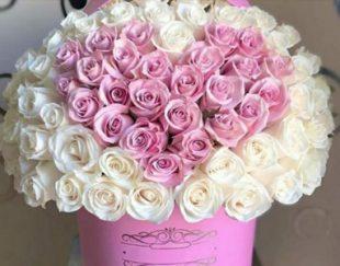 گلفروشی گل سنگ شاهین شهر